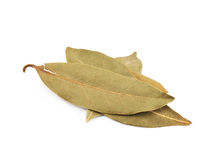 Pile of dried bay leaves isolated Royalty Free Stock Photos