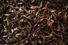 A pile of dried chili. In the warehouse Royalty Free Stock Image