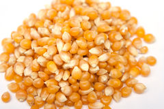 Pile dried corn isolated Royalty Free Stock Photo