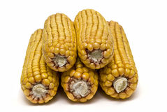 A pile of dried corncobs isolated. Royalty Free Stock Images