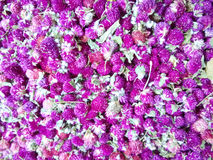 Pile of  dried flowers Stock Photo