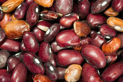 Pile of Dried Kidney Beans Dry Unrinsed Healthy Food Staple Royalty Free Stock Images