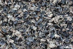 Pile of dried mushroom fungus royalty free stock photography