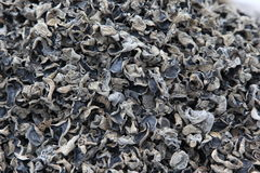 Pile of dried mushroom fungus Stock Photos