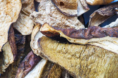 Pile of dried mushroom fungus. Macro Royalty Free Stock Image