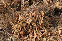 Pile of dried plant Stock Image