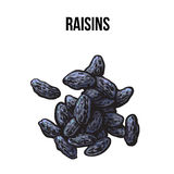 Pile of dried raisins, sketch style, hand drawn vector illustration. Pile of dried black raisins, sketch style vector illustration  on white background. Drawing Royalty Free Stock Photo