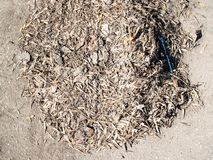 Pile of dried tree seed, fallen leaves and litter stock photos