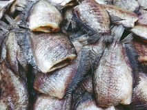 Pile of Dried Trichogaster pectoralis fish close up stock photo