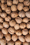 Pile of dried walnuts Royalty Free Stock Photos