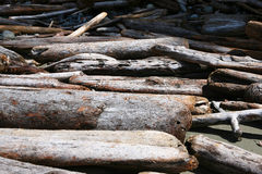 Pile of Driftwood Royalty Free Stock Image