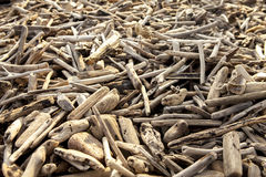 Pile of driftwood Royalty Free Stock Photography