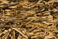 Pile of driftwood sticks in warm light on the beach, Maine. Royalty Free Stock Photography