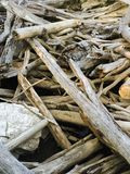 Pile of Driftwood Trees Royalty Free Stock Photography