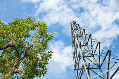 Pile Driver and tree Royalty Free Stock Images