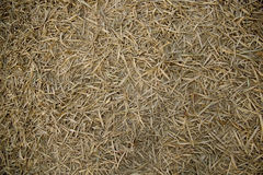 Pile of Dry bamboo leaves texture Stock Images