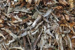A pile of of dry branches and twigs of trees royalty free stock image
