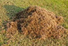 Pile of dry grass. At lawn, Gardening season Royalty Free Stock Photos