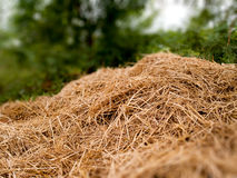 A pile of dry grass Royalty Free Stock Images