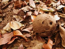 Pile of dry leaves and coconut Royalty Free Stock Image