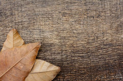 Pile of dry leaves Royalty Free Stock Photos