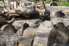 Pile of dry old logs Stock Photo