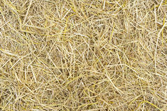 Pile of dry rice chaff. Surface texture background Royalty Free Stock Photos