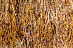 Pile of dry straw with spike Royalty Free Stock Image