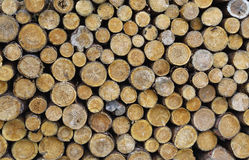 Pile of dry wood Stock Photo