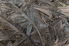 Pile of dumped dried palm leaf. Pile of dumped dried brown palm leaf stock image