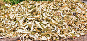 Pile of durian peels Royalty Free Stock Photo