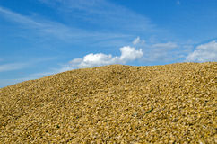 Pile ecological wheat grain corn harvest sky Stock Photos