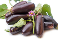 Pile of eggplant and a flower Royalty Free Stock Photos