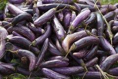 Pile of eggplants Royalty Free Stock Photo