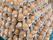 Pile of eggs stock photography
