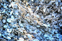 Pile of empty oyster shells Royalty Free Stock Image