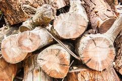 Pile en bois avec cinq branches Photographie stock libre de droits