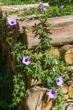 Pile en bois avec des fleurs en Nova Petropolis Images stock