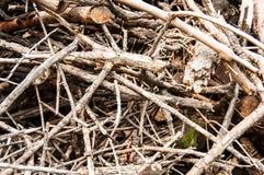 Pile en bois et plus petits bâtons Image stock