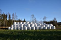 Pile with ensilage conservated in plastic Stock Photography