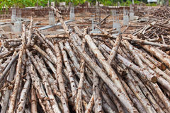 Pile of eucalyptus tree wood Royalty Free Stock Photos
