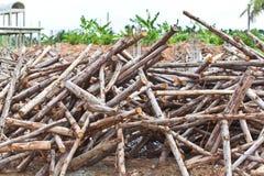 Pile of eucalyptus tree wood Stock Photos