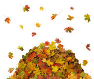 Pile of Fall Leaves Royalty Free Stock Photography