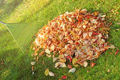 Pile of fall leaves with fan rake royalty free stock photo