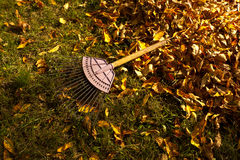 Pile of fall leaves with rake. Stock Photography