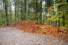 Pile of fall leaves Royalty Free Stock Image