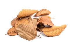 Dry Leaves Pile Isolated. Pile of fallen dry leaves isolated on white background stock photography