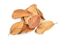 Dry Leaves Pile Isolated. Pile of fallen dry leaves isolated on white background royalty free stock photo