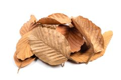 Dry Leaves Pile Isolated. Pile of fallen dry leaves isolated on white background royalty free stock image
