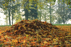 Pile of fallen leaves in park in autumn morning Stock Photography